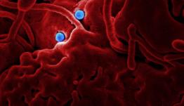 El Govern lanza ayudas para pymes como medidas excepcionales frente al coronavirus