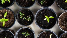 La convocatoria europea de Bioindustria presenta nuevos cambios