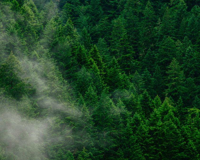 El medio ambiente, un nicho y un valor añadido para las startups